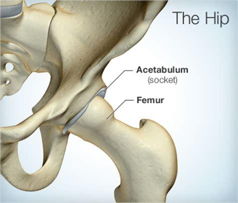 Tulang Gigitan Hip Bone timeline hip replacement surgery