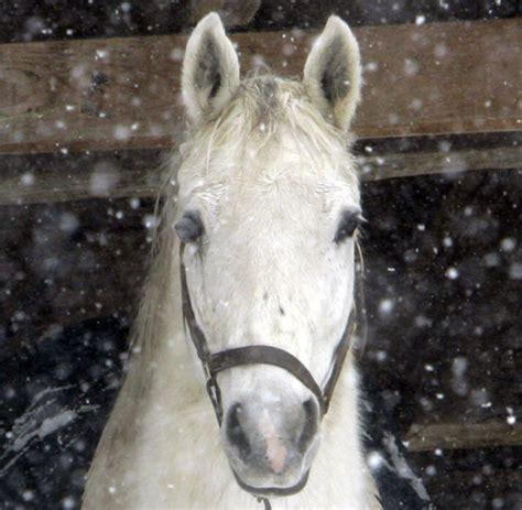 domesticated horses millennia five were welt veroeffentlicht minuten lesedauer 2009 am