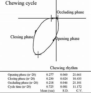 Typical Record Of Frontal Chewing Path And Chewing Cycle