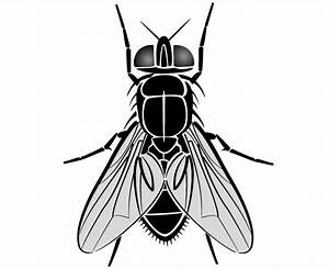 Fly Drawing Free - ClipArt Best