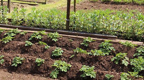 Saintgeorges Souhaite Implanter Un Jardin Communautaire