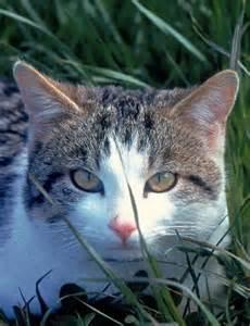 Animal Neglect Cats