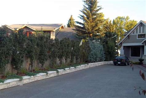 landscape ideas for privacy between houses landscape ideas for privacy between houses izvipi com