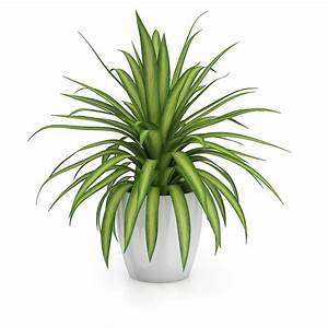 Free 3D Small Plant in Round Pot - CGAxis 3D Models Store