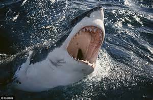 Jaws! Two Great White Sharks Detected Off The Cape Cod