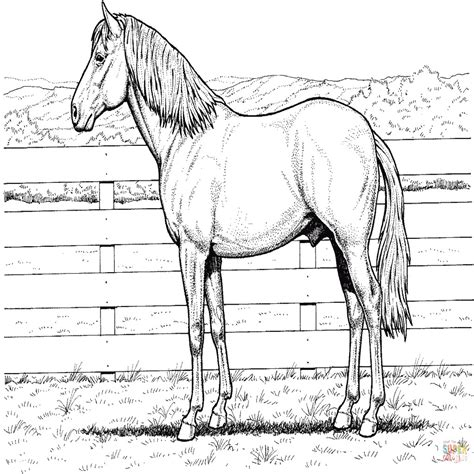 immagini di cavalli che saltano da colorare disegno di cavalli che saltano un ostacolo da colorare