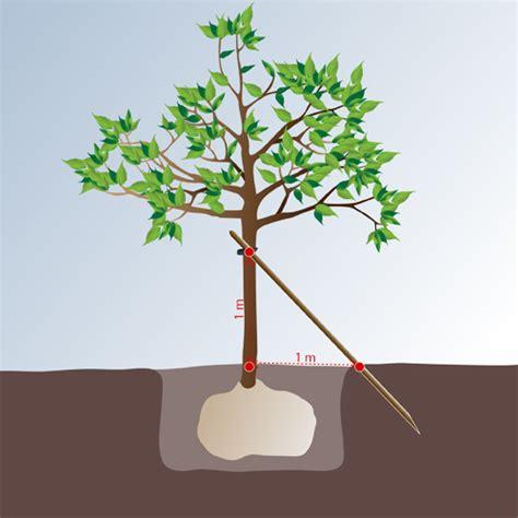 planter un arbre en pot tuteurer un arbre jardinage