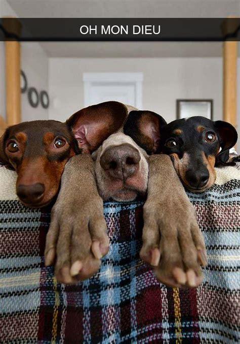 de chiens avec des legendes hilarantes