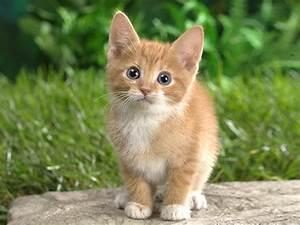 Cute cat | NVID... Cute Cats