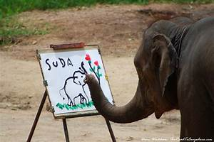 An elephant painting a picture in Chiang Mai, Thailand ...