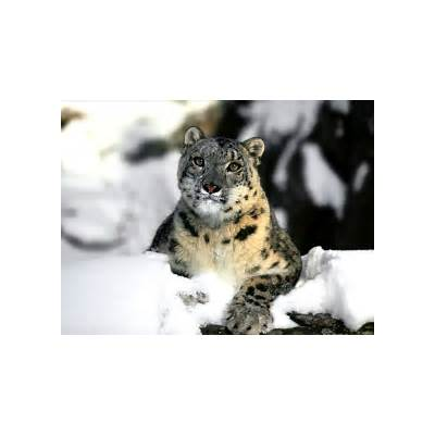 Snow leopard wallpaper- Os x snow download