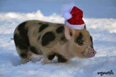 1000 images about in santa hats on Pinterest