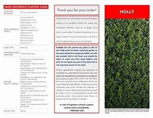 National Plant Network Hd7138 2 5 Qt  Holly Oakland Shrub