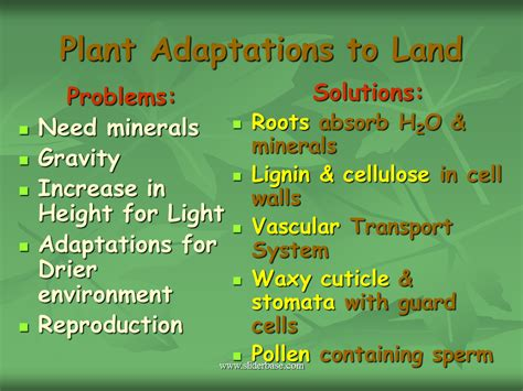 Introduction To The Plant Kingdom  Presentation Biology