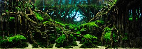 Aquascape Competition by Grand Prize Works The International Aquatic Plants