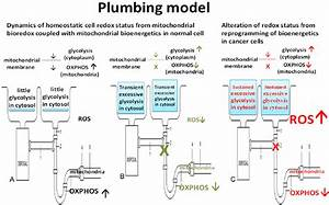 A Plumbing Model Illustrate The Understanding Of The