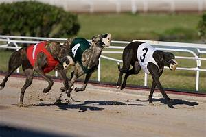 Poole Greyhounds: a dying sport? The persuasive power of ...