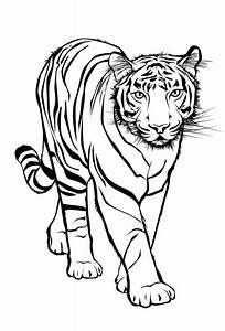 Ausmalbilder, Tiger, Ausdrucken