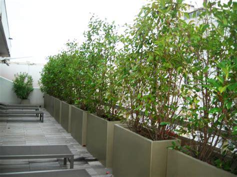plante pot pour balcon