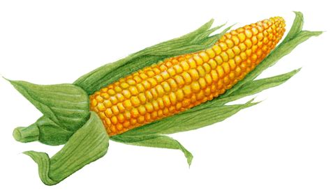 vegetables seafood the world s healthiest foods corn