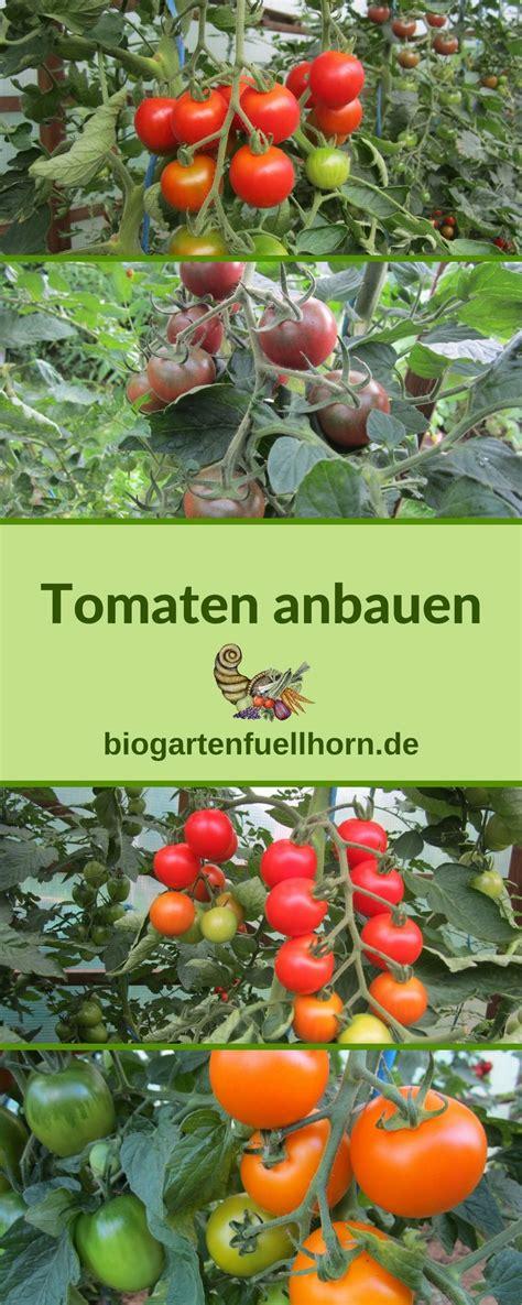 tomatenanzucht biogarten fuellhorn tomaten garten