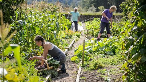 the of gardening read about rhs affiliated societies and get involved rhs gardening