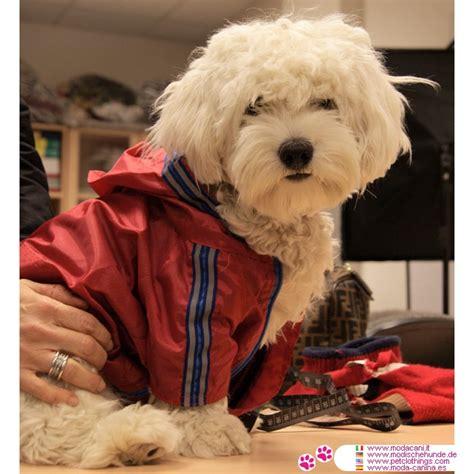 Regenmäntel Für Kleine Hunde