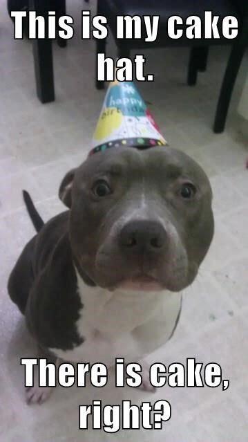 ideas  happy birthday dog  pinterest
