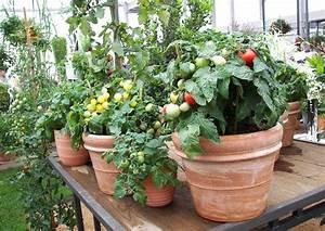 Blument pfe aus ton oder plastik for Pflanzgefäße terrasse