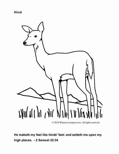 Coloring Pages Bible Kjv Verses Deer Verse