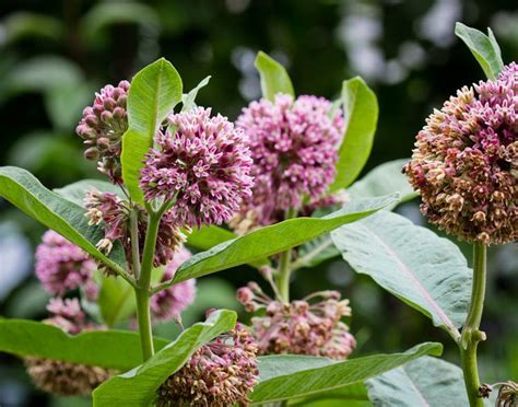 292 Best New Jersey Native Plants Images On Pinterest