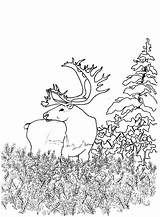 Coloring Woodland Animals Forest Creatures Printable Animal Library Creature Bestcoloringpagesforkids Tropical Adult Fantasy Nature Popular Clipart Rainbow sketch template