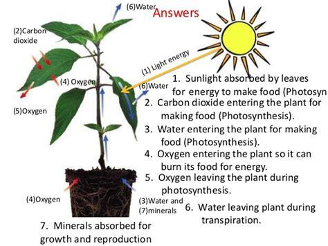 photosynthesis teach