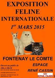 Fontenay Le Comte 85 : exposition f line internationale fontenay le comte 85 le dimanche 1 er mars 2015 animogen ~ Medecine-chirurgie-esthetiques.com Avis de Voitures