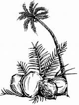 Coconut Palm Coloring Pages Tree Drawing Oil Fruits Printable Recommended Clip Colors Coloringhome sketch template