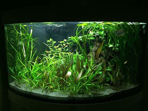 best 25 trigon 190 ideas only on juwel trigon aquascaping and betta aquarium