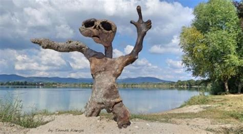 unbelievable driftwood art  inspire  recyclart