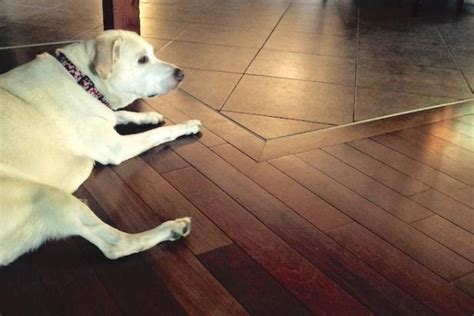 hardwood floor dogs the house counselor answers how do you protect hardwood floors from pets diy network blog