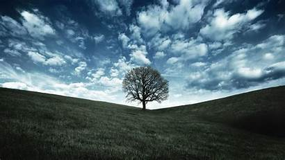 Tree Wallpapers Backgrounds Background Hope Enjoyed Device