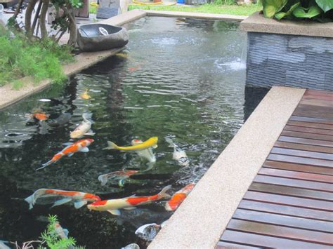 coy fish pond designs fish ponds http lomets com