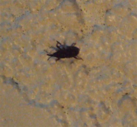 insectes dans la cuisine petit insecte noir qui pullule dans notre cave notre