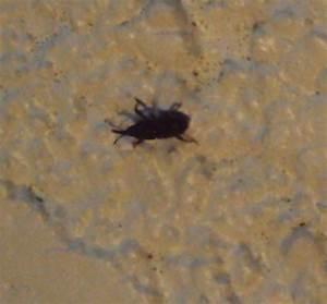 Insecte De Maison : petit insecte noir qui pullule dans notre cave notre ~ Melissatoandfro.com Idées de Décoration