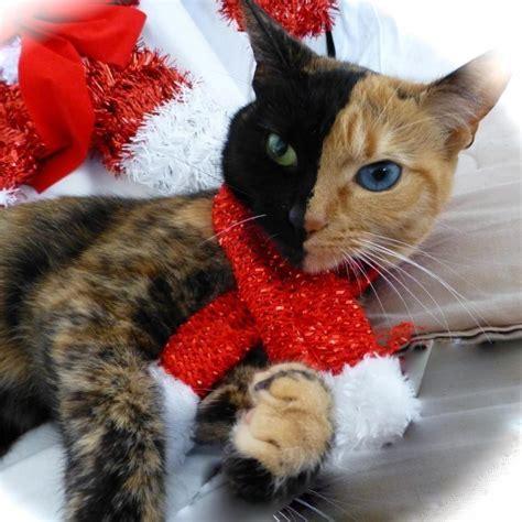 10 kaķi, kurus ''krāsojot'' māte Daba ir īpaši pacentusies