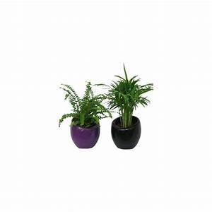 Cache Pot Plante : assortiment de 2 mini plantes cache pots noir violet 2 mini plantes pot 6 cm cache pots ~ Teatrodelosmanantiales.com Idées de Décoration