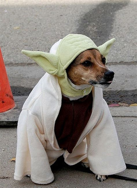 dogs dressed  star wars characters