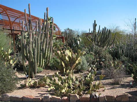 desert botanical garden file cacti desert botanical garden jpg