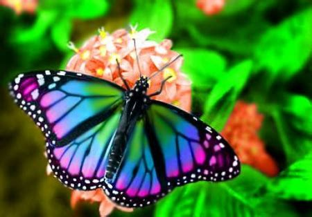 colorful butterfly butterflies animals background