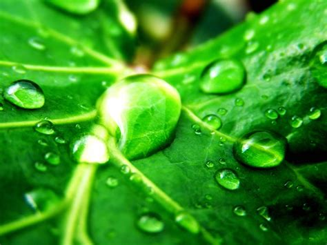 Permalink to Nature Wallpaper Green Hd