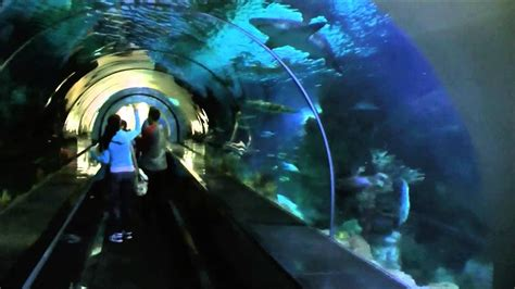 Shark Encounter Seaworld San Diego Youtube