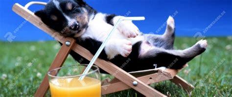 Urlaubs Checkliste Daran Sollten Sie Vor Der Reise Denken by Reportage Verreisen Mit Hund Daran Sollten Sie Denken